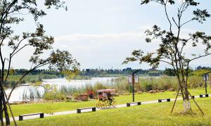 """市民在斗南湿地公园""""美丽画卷""""中骑车。"""