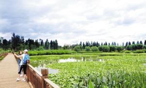 市民在海东湿地公园欣赏优美的湿地风光。记者黄晓松摄