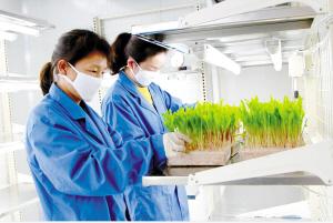 云南北玉种子科技有限公司的种子新品种研发现场。 宜良工业园区管委会供图