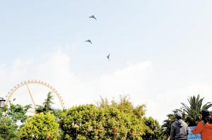 大观公园专门开辟的风筝广场。本组图片记者杨艳辉摄