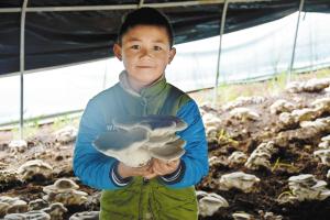 长湖镇雨胜村种植的鲜菌获丰收。