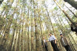 禄劝县筑牢绿色生态屏障。 记者周密摄