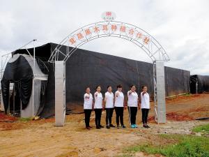 张树兰(右三)带领农户成立合作社种植高原云耳。