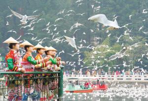 翠湖鸥潮。 胡晓立摄