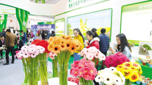 去年农博会花卉产品展示。 本报资料图片