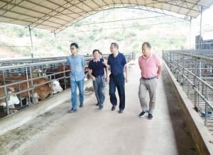 政协委员走访三江并流项目。