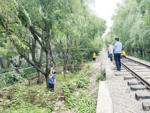执法人员对铁路沿线种植的蔬菜进行铲除。