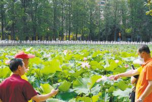 翠湖公园 荷花节今日开幕
